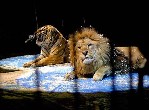 http://www.sofia-guide.com/assets/circus_balkanski_lion_tiger.jpg