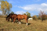 Wild horses stable
